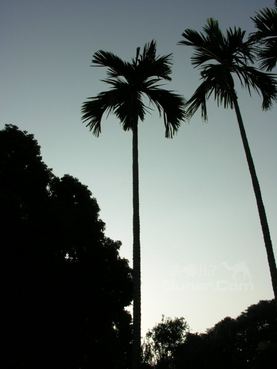 院子里有很多椰子树,非常得美,走着走着发现两棵树间竟有吊床,我也
